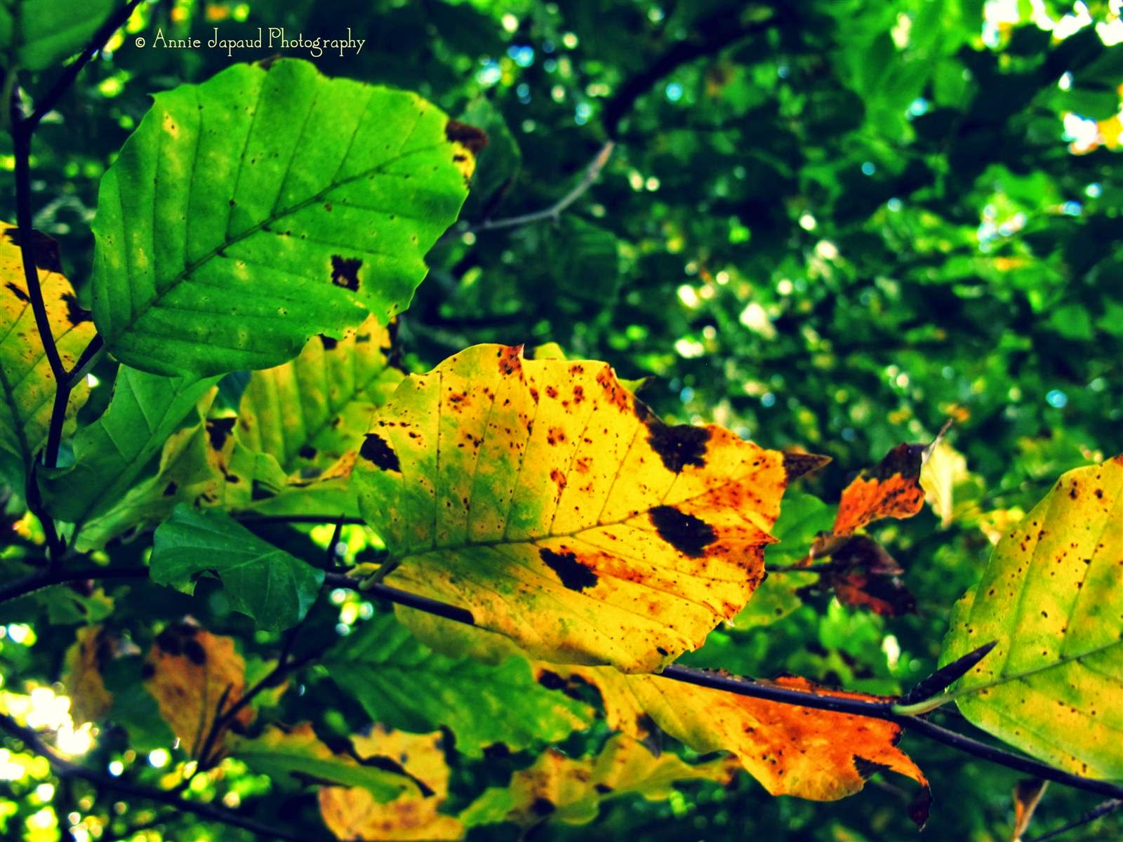leaves, autumn