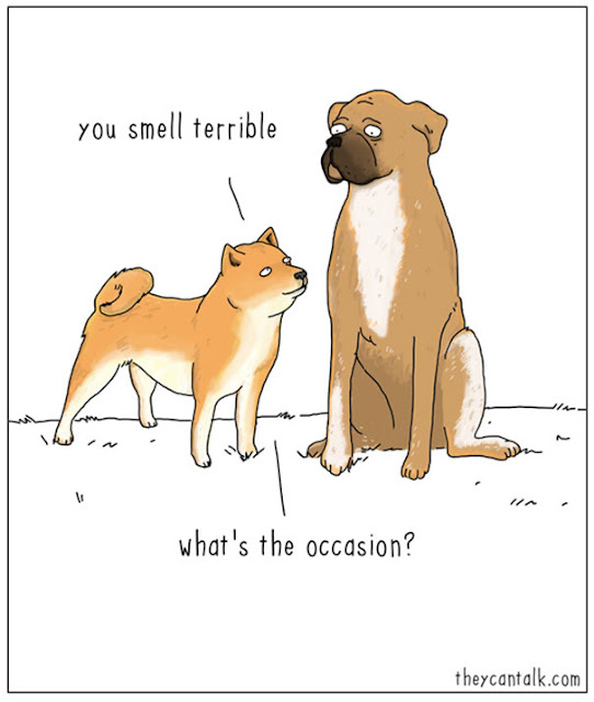 dogs talking about smells