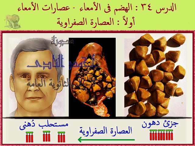 التغذية فى الكائنات غير ذاتية - الجهاز الهضمى فى الإنسان - الهضم فى الأمعاء - العصارة الصفراوية - أحياء الثانوية العامة - مدونة أحمد الناد