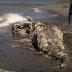 Μυστηριώδη πλάσματα που ξέβρασε ο ωκεανός (video)