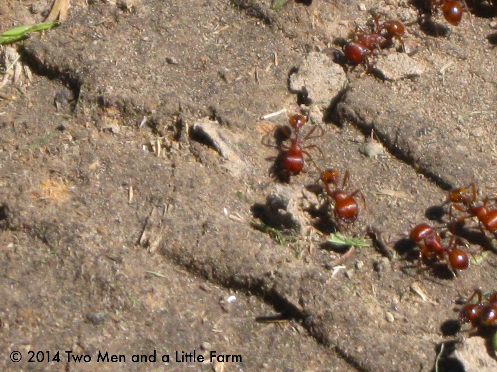 To Kill Bed Bugs: Spray To Kill Bed Bugs India