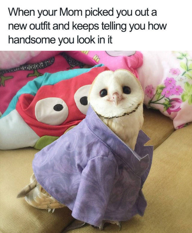 When your Mom picked you out a new outfit and keeps telling you how handsome you look in it.