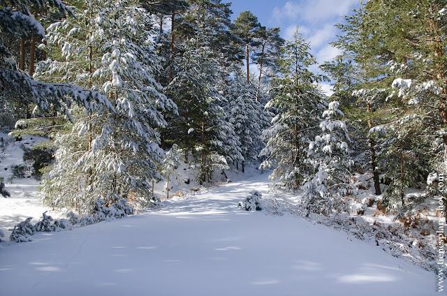 Ruta bonita circular sierra madrid nieve raquetas facil paisajes