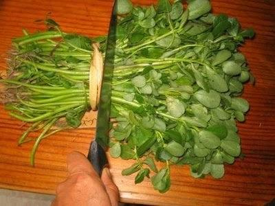 Dianajo Verdolagas con carne de puerco en salsa verde is for dinner