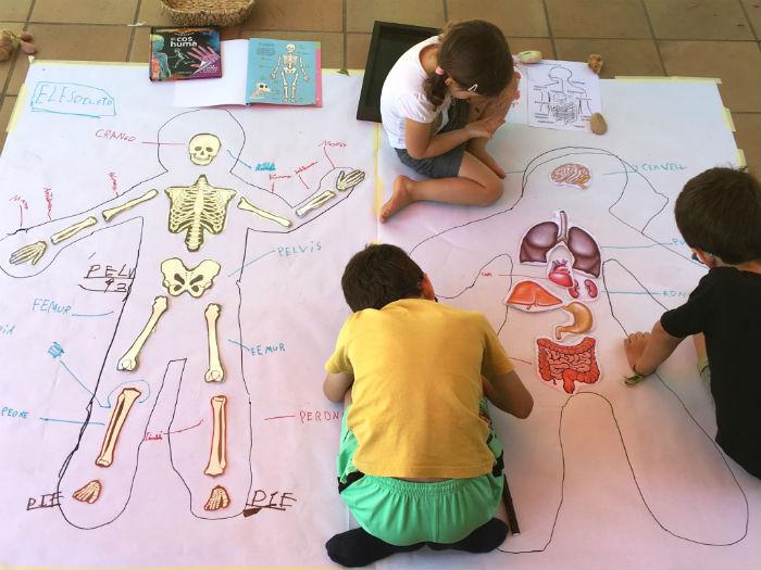 actividad manualidad descubrimos nuestro esquelto y órganos principales cuerpo humano