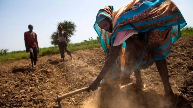 هل يُمكن للتعديل الجيني أن يُنقذ البشرية من ويلات مجاعة عالمية؟