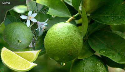 Lime, lime fruit,কাকজি লেবু,সরবতি লেবু
