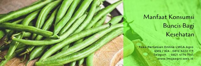 Buncis,tanaman buncis,benih buncis,budidaya tanaman,lmga agro