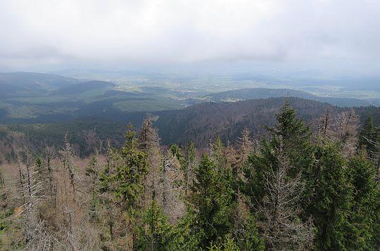 Widok z wieży na Mogielicy.
