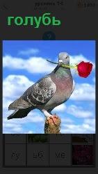 На высоком шесту на фоне голубого неба сидит голубь и в клюве держит красный цветок розу