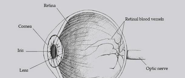 Biometría de iris vs retina