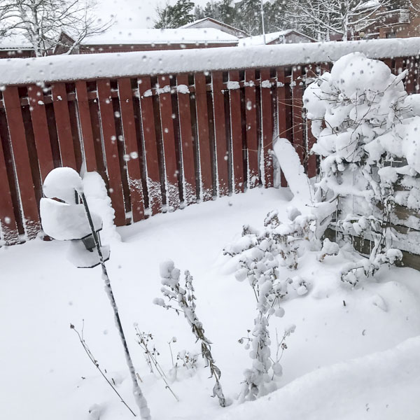 snö, trädgård
