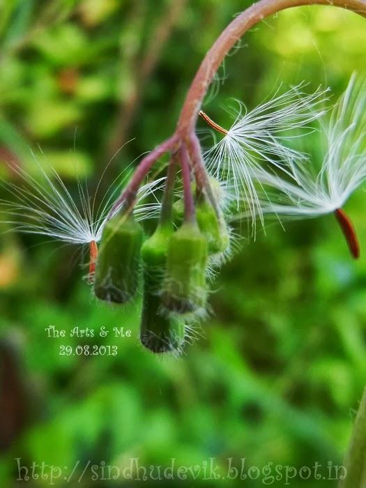 Flying seeds: Get Set Go!