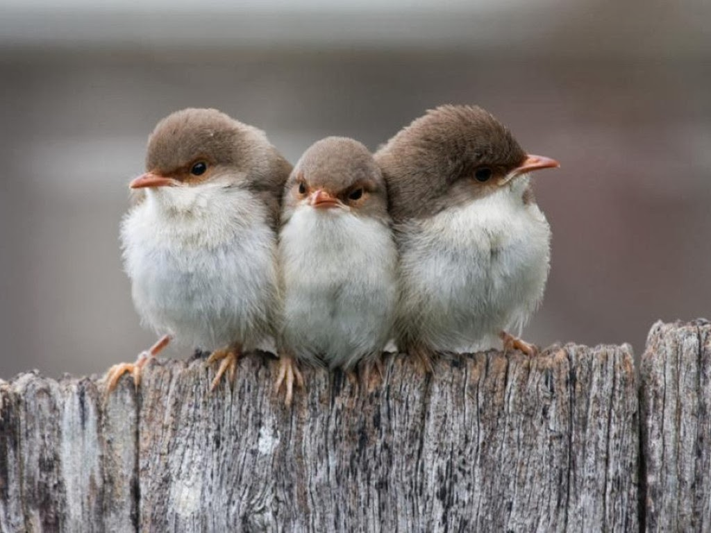 Funny animals of the week - 14 February 2014 (40 pics), three little birds