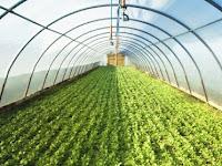 Banyak yang Belum Tahu, Greenhouse Itu Apa Sih?