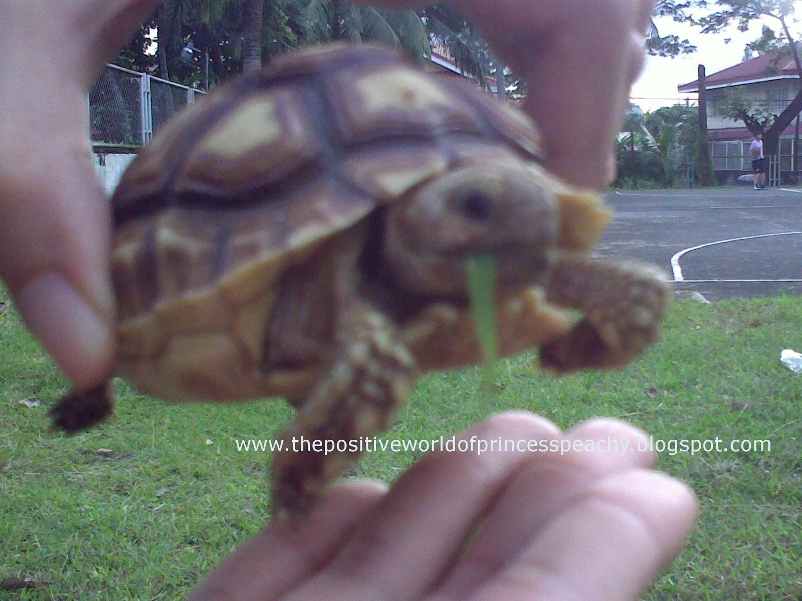 The Positive World Of Princess Peachy, The Happy Sulcata Tortoise: I