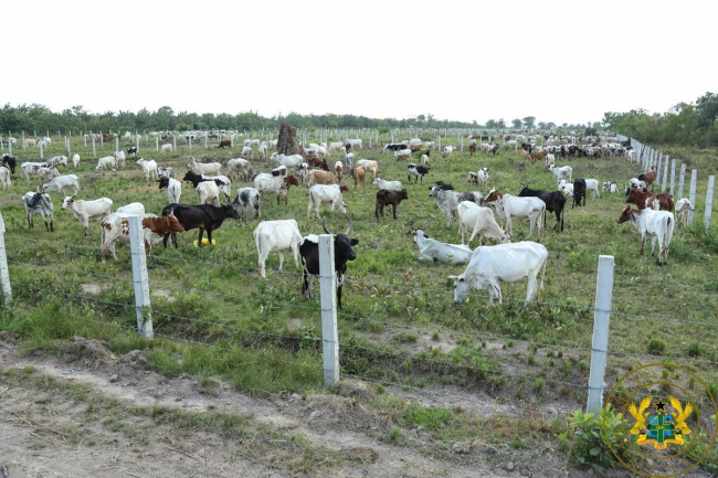 """""""Afram Plains Cattle Ranch To Help End Clashes"""" – President Akufo-Addo"""