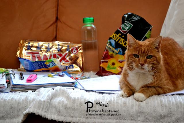 Katze Mimi als Unterstützung beim Lernen