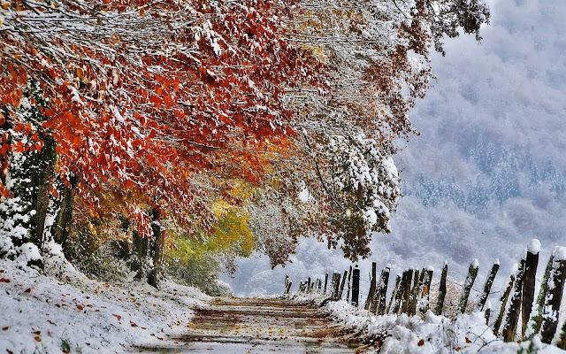 Bomen met herfstbladeren en sneeuw op de grond.