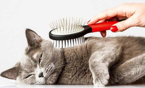 Brushing Your Cat? Here Are Mistakes to Avoid