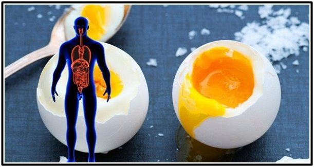 What Happens To Your Body By Eating 2 Eggs A DaYS