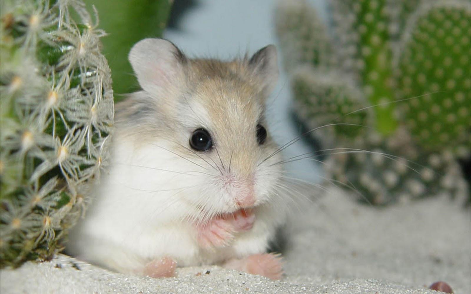Cute Cupcake Wallpaper Hamsters Achtergronden Hd Wallpapers
