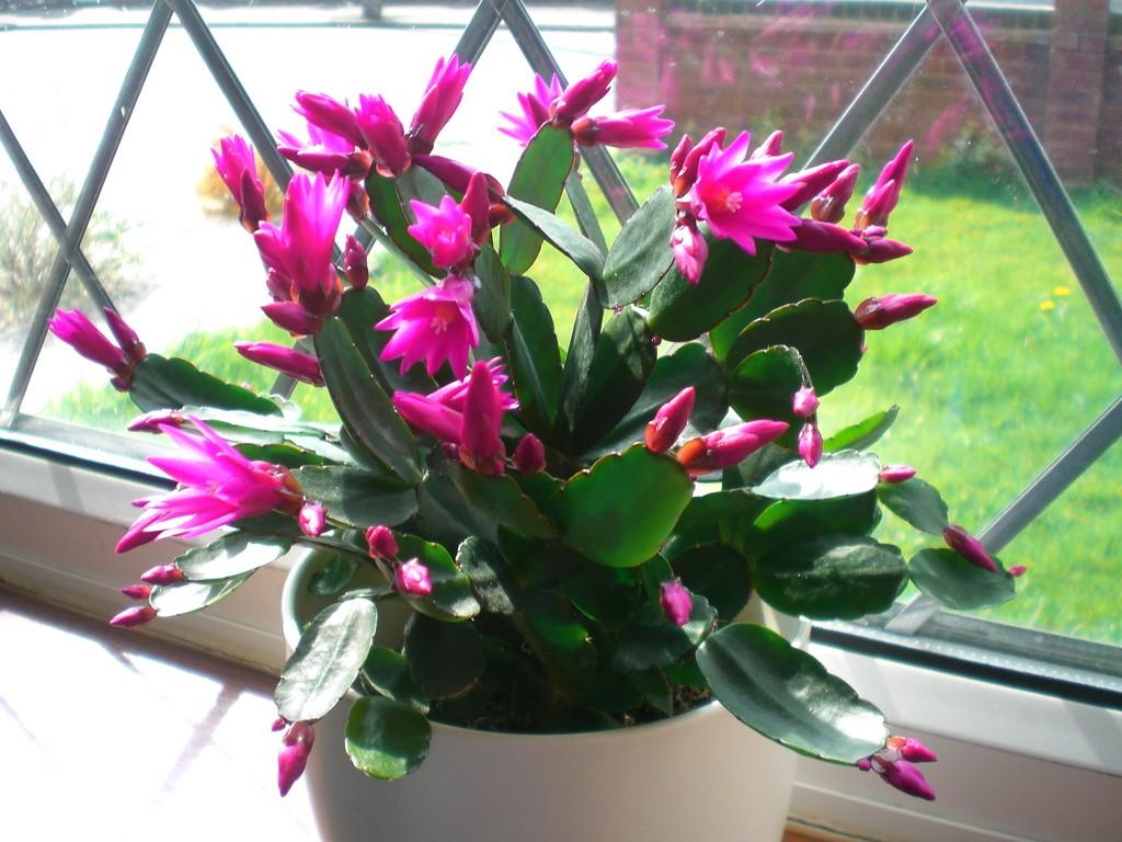 How To Grow Easter Cactus ! Garden Bible