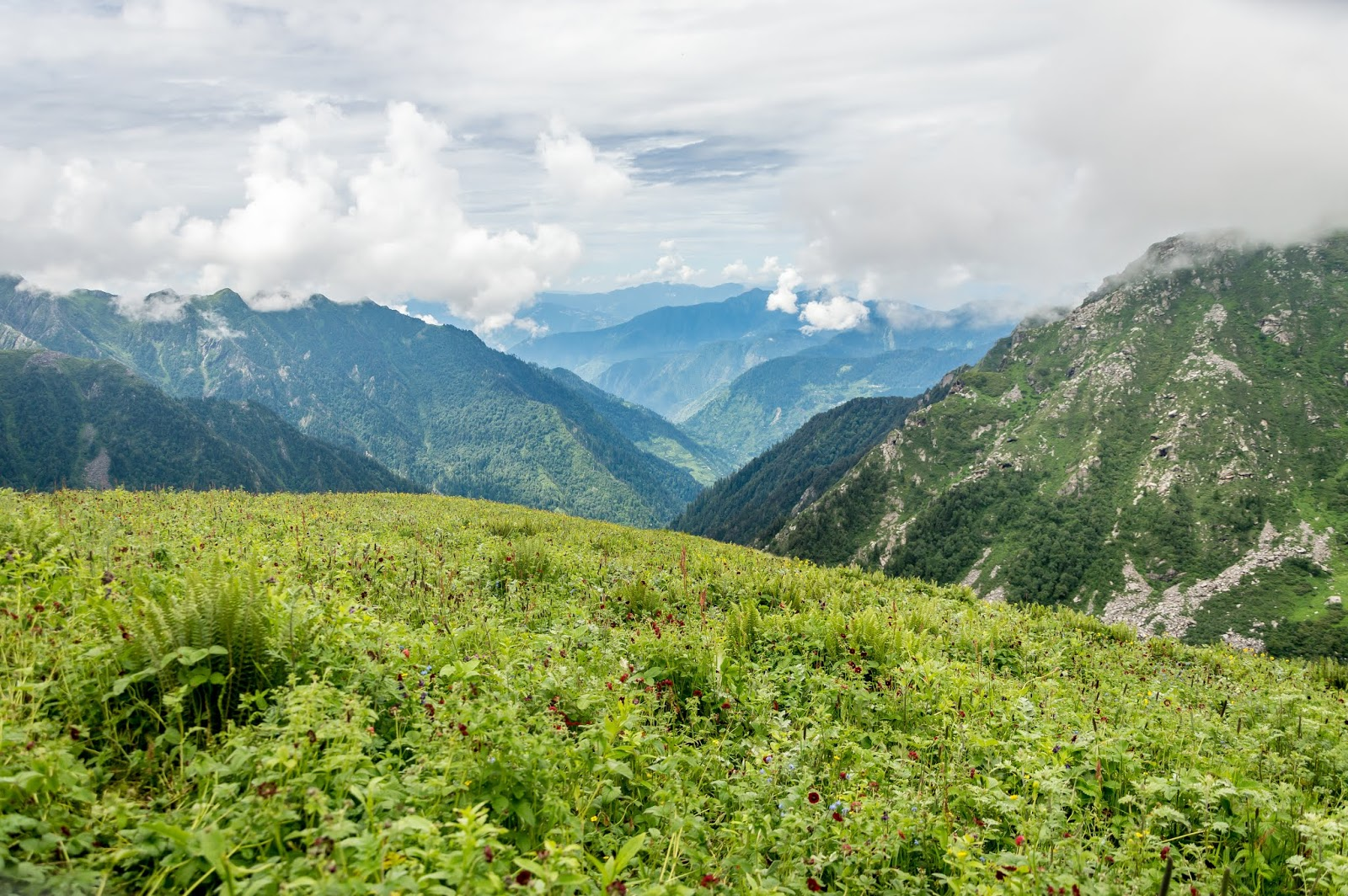 Valley of Flowers, but the green is dominating the flowers