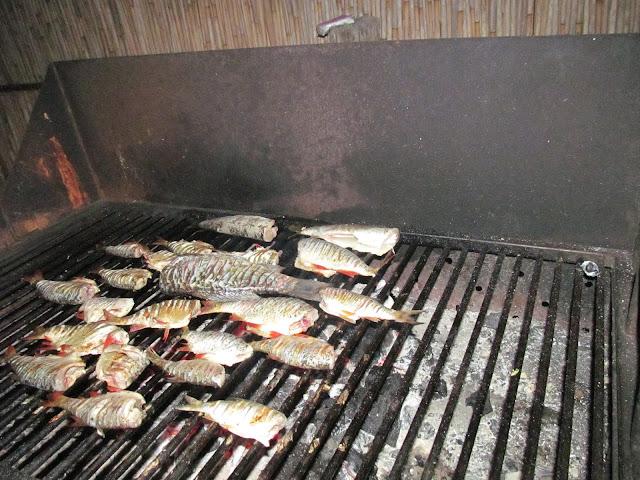 pescuit delta dunarii sfantu gheroghe