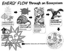 ecosystem & ecology: energy and matter in ecosystems
