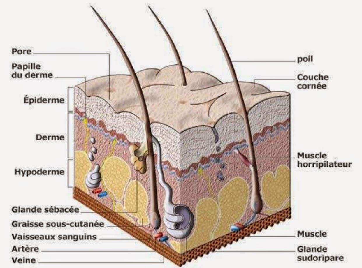 m so botox pour lutter contre la peau grasse et les pores dilat s. Black Bedroom Furniture Sets. Home Design Ideas
