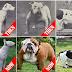 Πόσο ο άνθρωπος έχει αλλάξει τον σκύλο; Τι αποδεικνύουν φωτογραφίες...