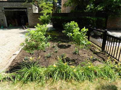 Mount Pleasant West garden renovation removing lawn after by Paul Jung Gardening Services Toronto
