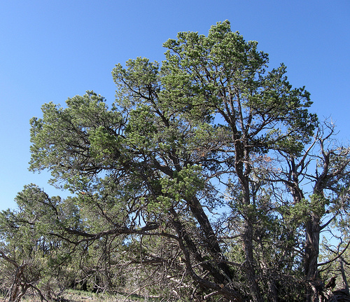Abcreads: New Mexico Trees