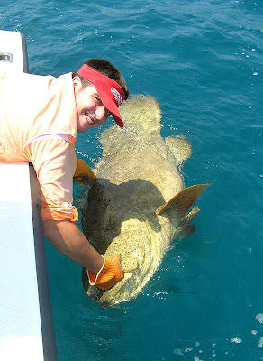 Big Fishes of the World: GOLIATH GROUPER page 2