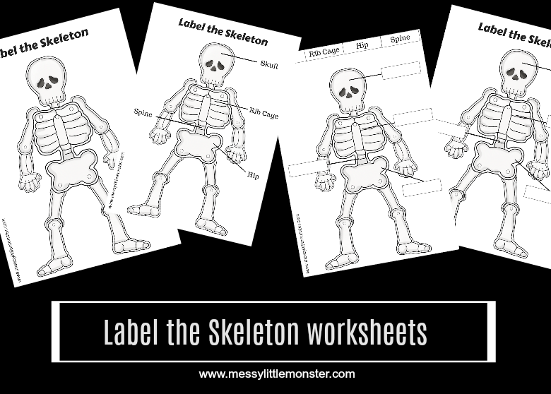 Label a human skeleton worksheet printable for kids