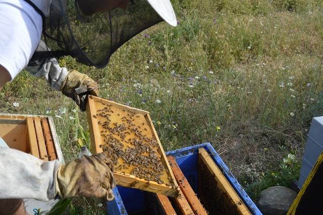 Μυθοι και αληθειες παλιών μελισσοκόμων