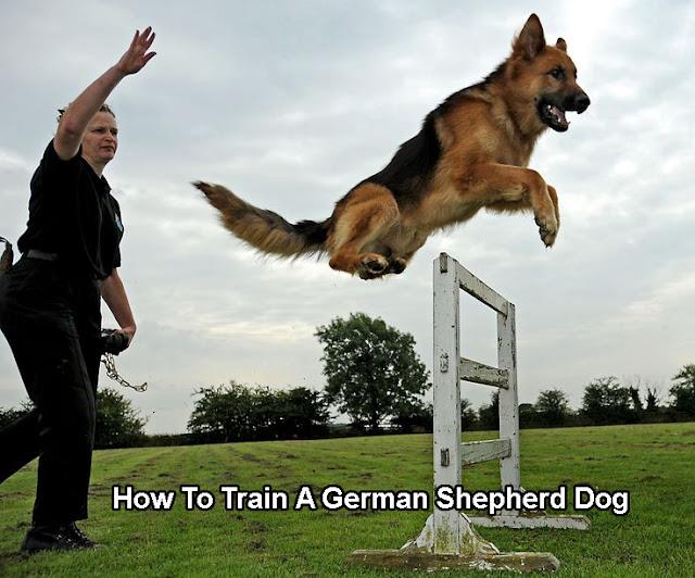 How To Train A German Shepherd Dog