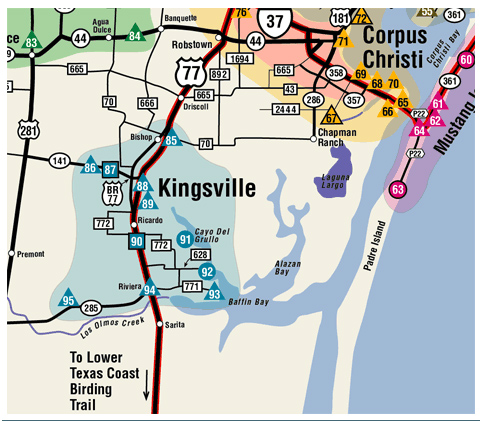 Map Of Texas Kingsville.Blue Skies Kingsville Texas Birding Environs By Air And Land