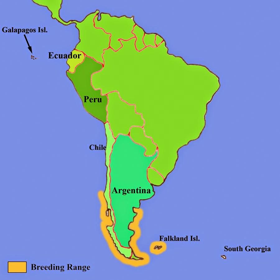 Penguin habitat map - photo#49