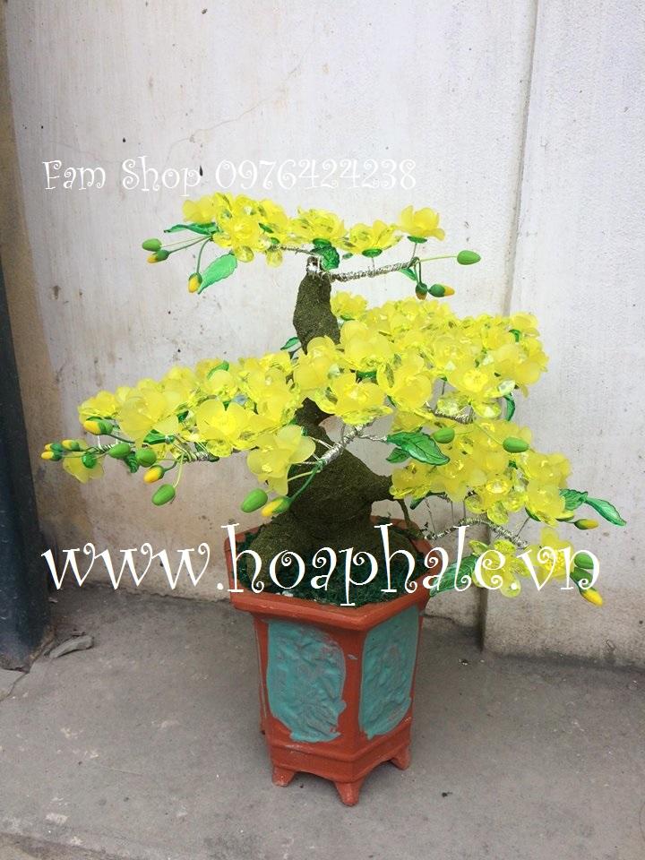 Goc bonsai cay hoa mai o Thien Quang
