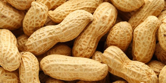 Cara Makan Kacang yang Benar