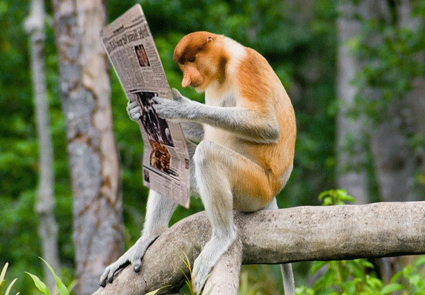 Flora dan Fauna Khas Kalimantan Selatan  THE COLOUR OF