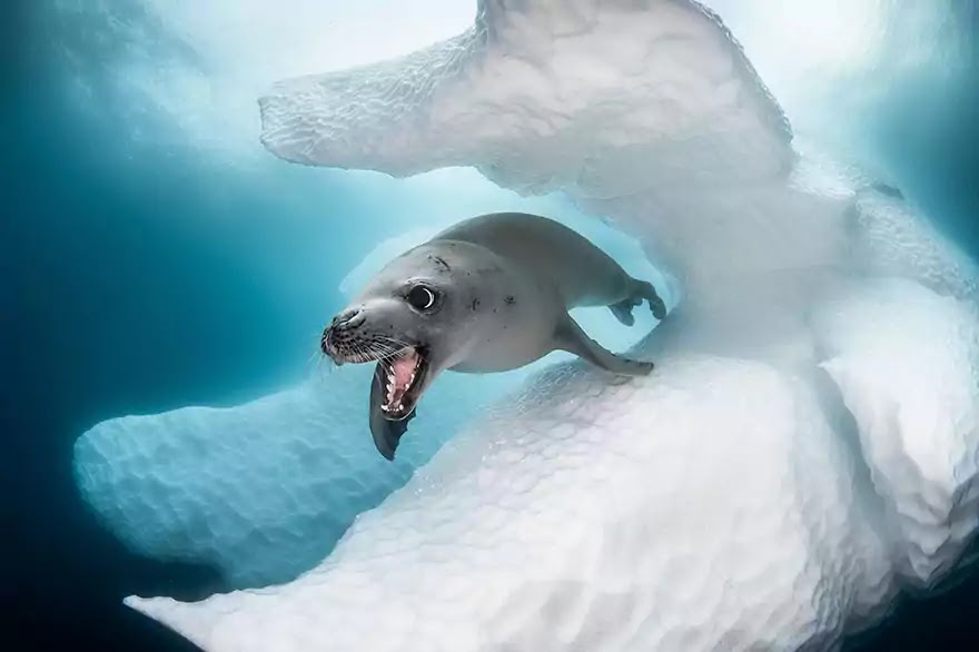 Breathtaking Pictures That Won The Ocean Art 2019 Contest
