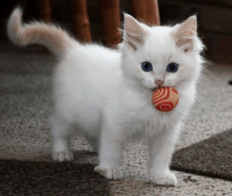 Usia Cocok Adopsi Anak Kucing Kapan