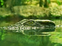 http://mightyeco.blogspot.com/2014/05/crocodiles-global-warming-crocodiles-global-warming-crocodiles.html