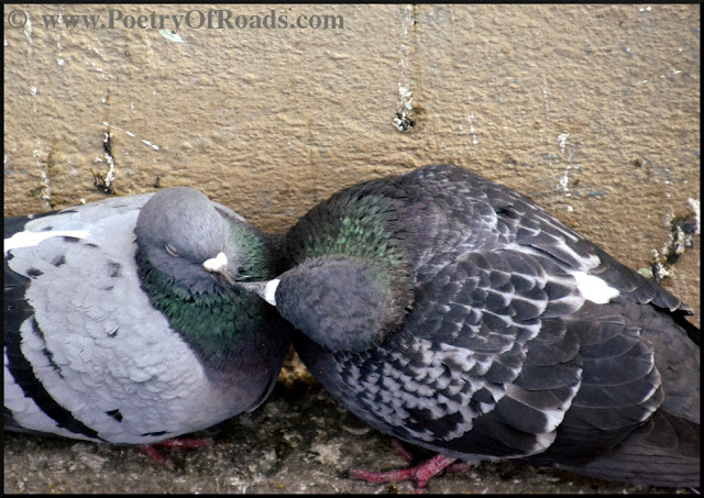 Perky Pigeons and that evocative December afternoon