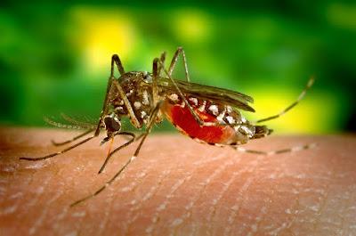 Perusahaan Induk Google Bakal Basmi Seluruh Nyamuk Di Muka Bumi