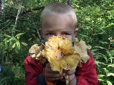 grzyby 2017, grzyby w sierpniu, grzyby na Orawie, pieprznik ametystowy, borowik szlachetny, porażony gołąbek