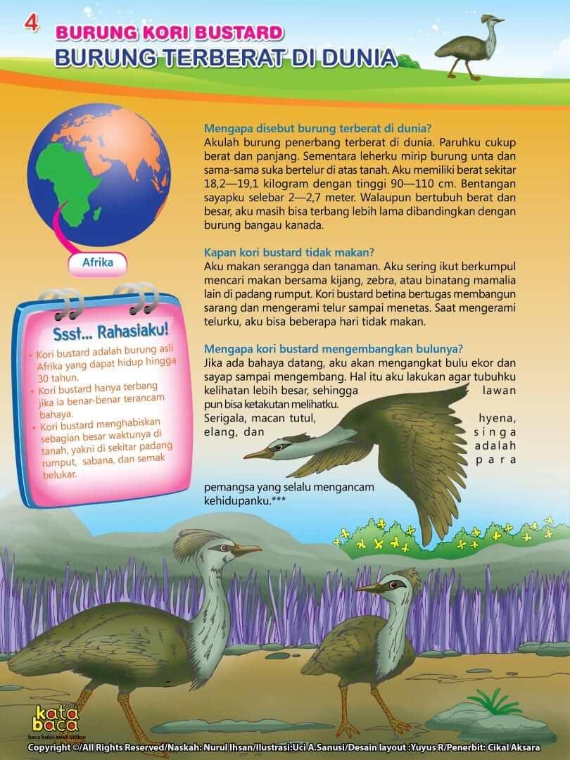 Burung Kori Bustard - Burung Terberat di Dunia